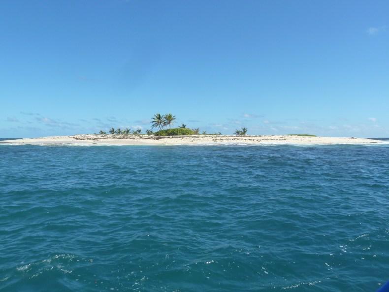 Captain Roro bateau journée iguane martinique ilet loup garou