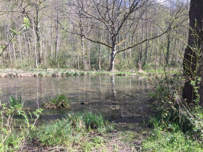 Marais de Maincourt Vallée de Chevreuse Yvelines