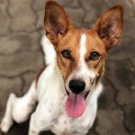 Rosie the Sri Lankan Street Dog