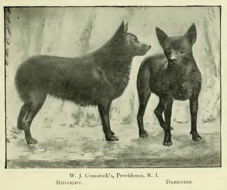 cani vittoriano