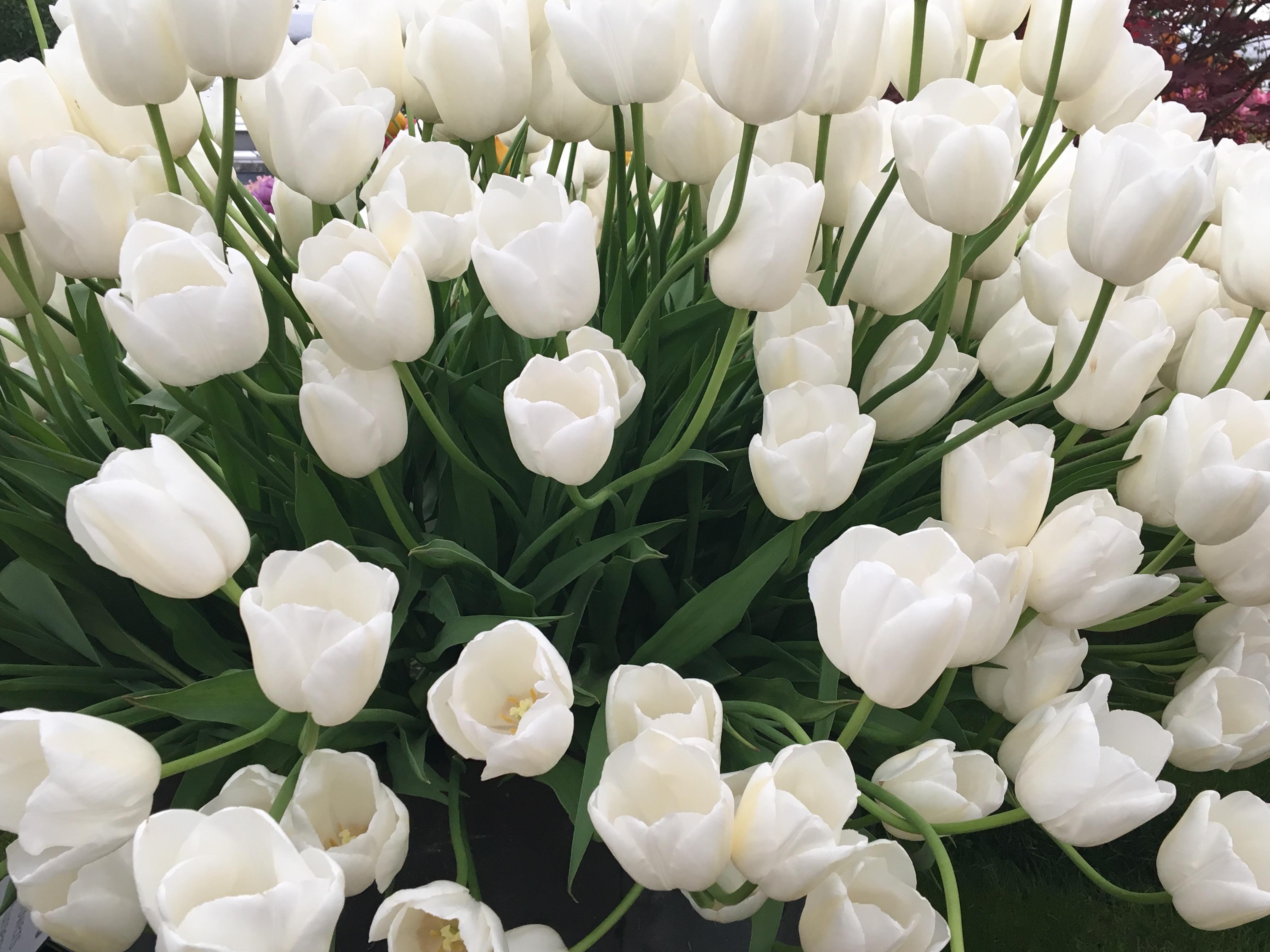 chelsea-flower-show-5