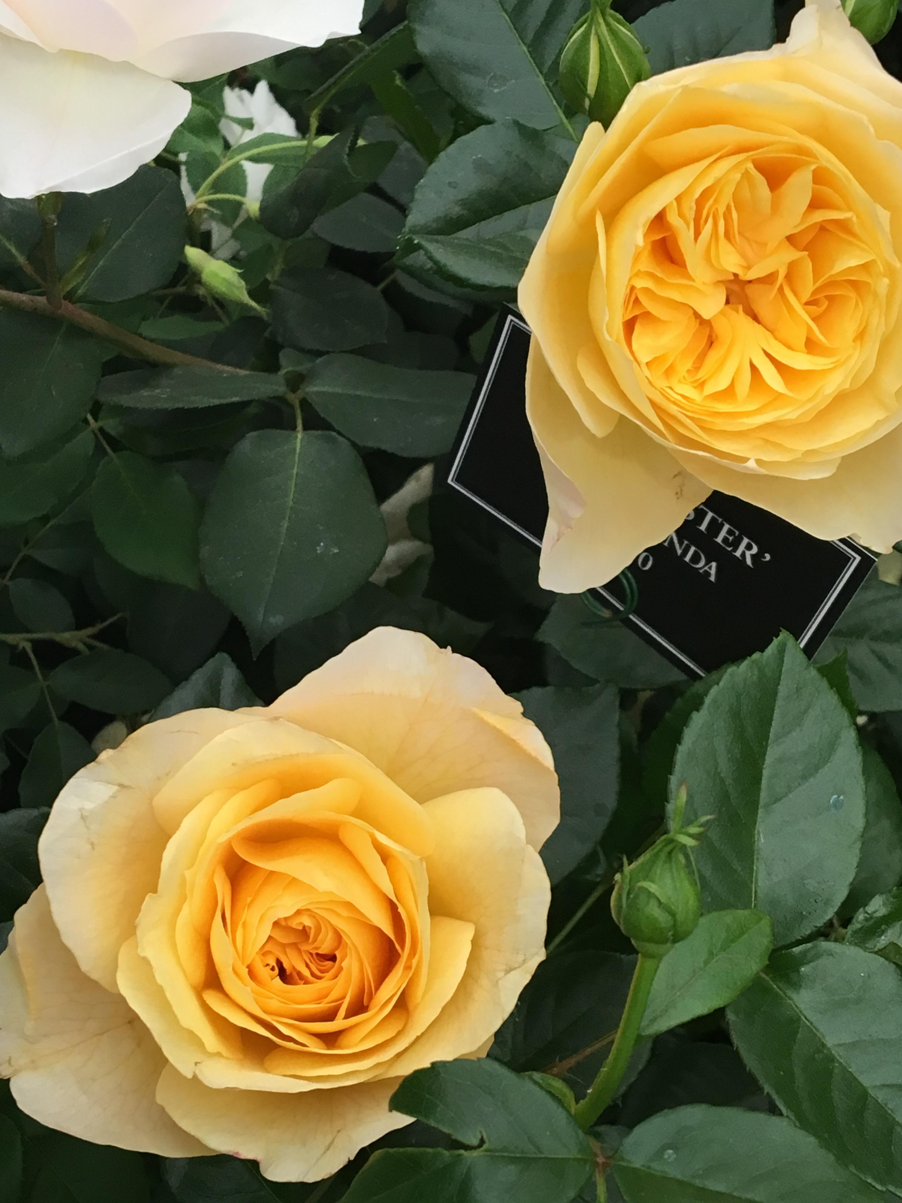 chelsea-flower-show-1