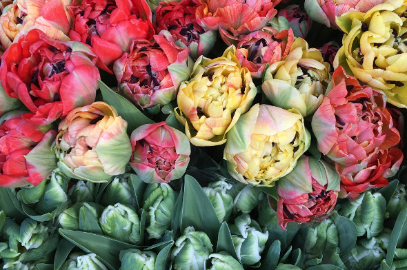 flowers-in-london