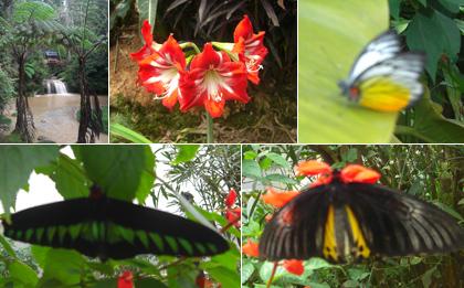 Butterfly Farm, Cameron Highlands