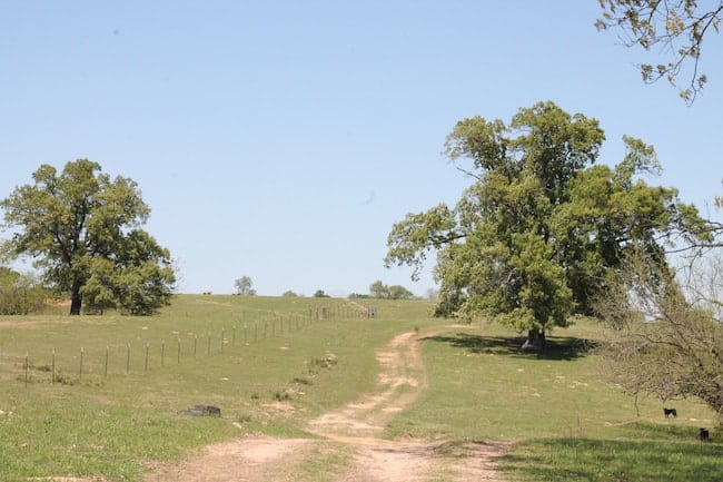 Ranch Road with trees