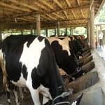 Nepal Mission Buffalo-farming AGRO TOURISM IN NEPAL