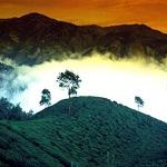 Nepal Mission Tea-garden-in-the-altitude-Nepal HIGH ALTITUDE GREEN TEA