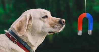 I cani sono delle bussole