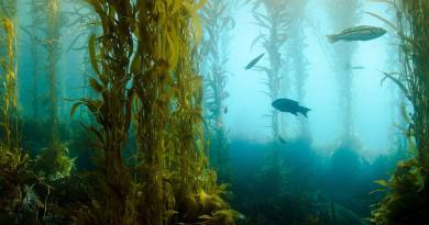 Come si riproducono le piante acquatiche?