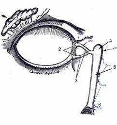 lacrimal excretory system [ 1024 x 884 Pixel ]