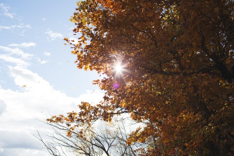 Mission Springs Resort Fall 2015