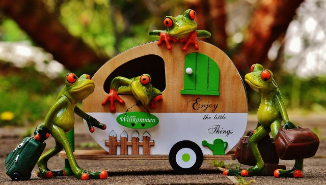 frogs-1358820_1920