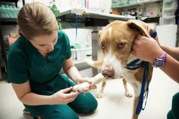 career choices veterinarian