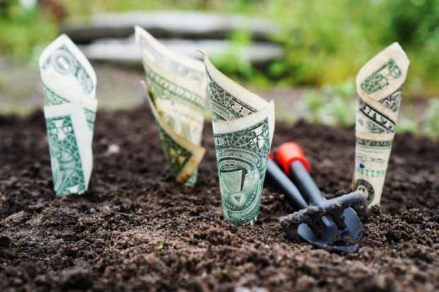 dollar bills planted into the ground as budgeting tips