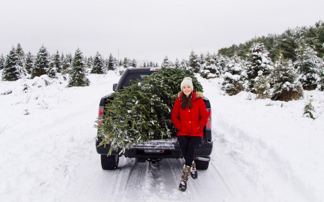 Choosing Our Christmas Tree