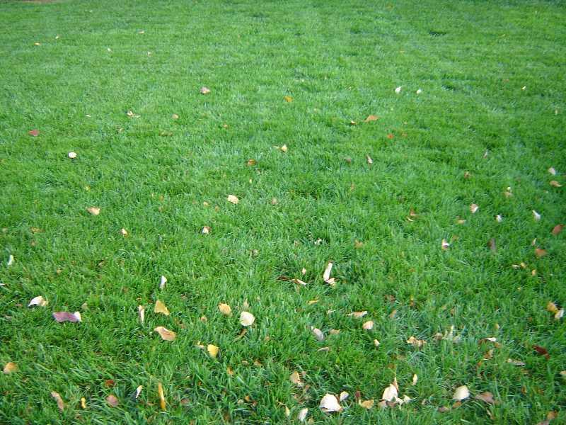 Rainy Fall Wallpaper Lawn Problems Cool Season Grasses