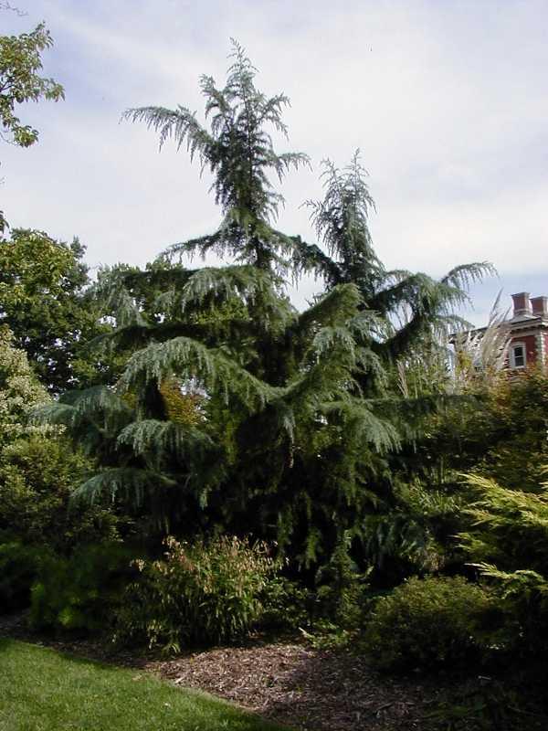 trees oklahoma gardens