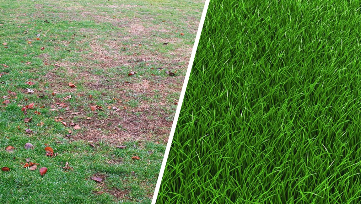 Know Your Lawn Mixes