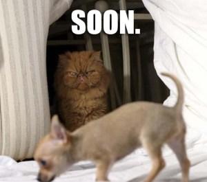 Soon ...