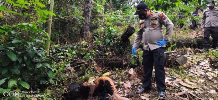Mayat Wanita Tua Ditemukan dengan Kondisi Kepala Terbakar di Perladangan