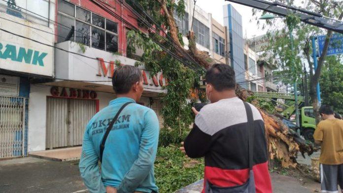 Pohon Tumbang d Jalan Gatot Subroto Medan Hantam Satu Unit Ruko