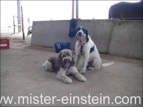 Hundebrüder