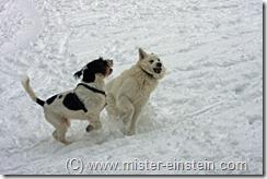Schlittenfahren Jan 2010 2010-01-31 006_bearbeitet-1