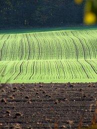 greenriverflowingover-freshlyfurrowedfieldsharp