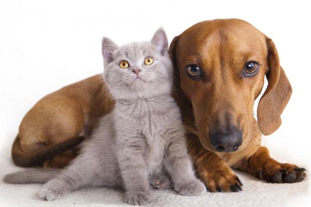 Olio di Canapa per Cani, Gatti e altri animali