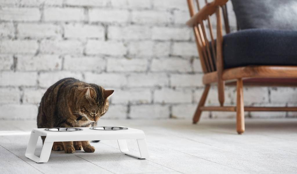 Desco Cat Feeder