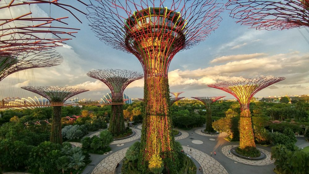 Darf ich vorstellen: Die Super Trees!!! Info: Die Super Trees, pflanzenbewachsene Stahlgerüste mit Höhen zwischen 25 und 50 Metern. Sie dienen unter anderem der Aufzucht von seltenen Pflanzen. Ferner wird mittels Photovoltaik Elektrizität für Beleuchtung und Kühlsysteme gewonnen, werden die Niederschläge zur Bewässerung der Pflanzen gesammelt und einige der Bäume dienen als Kühltürme für die Kühlsysteme in den Glashäusern. Zwei der Türme werden in luftiger Höhe mit einem Skyway verbunden, den die Singapurische Oversea China Banking Corporation (OCBC) finanziert hat. Nachts werden die Türme beleuchtet und es finden Licht- und Tonshows statt, die die Bank sponsert.