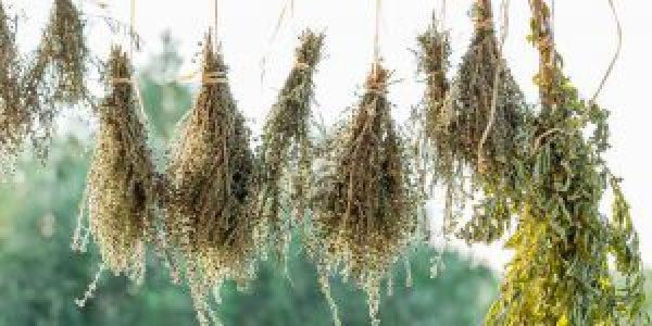 Πώς αποξηραίνουμε αρωματικά φυτά και βότανα