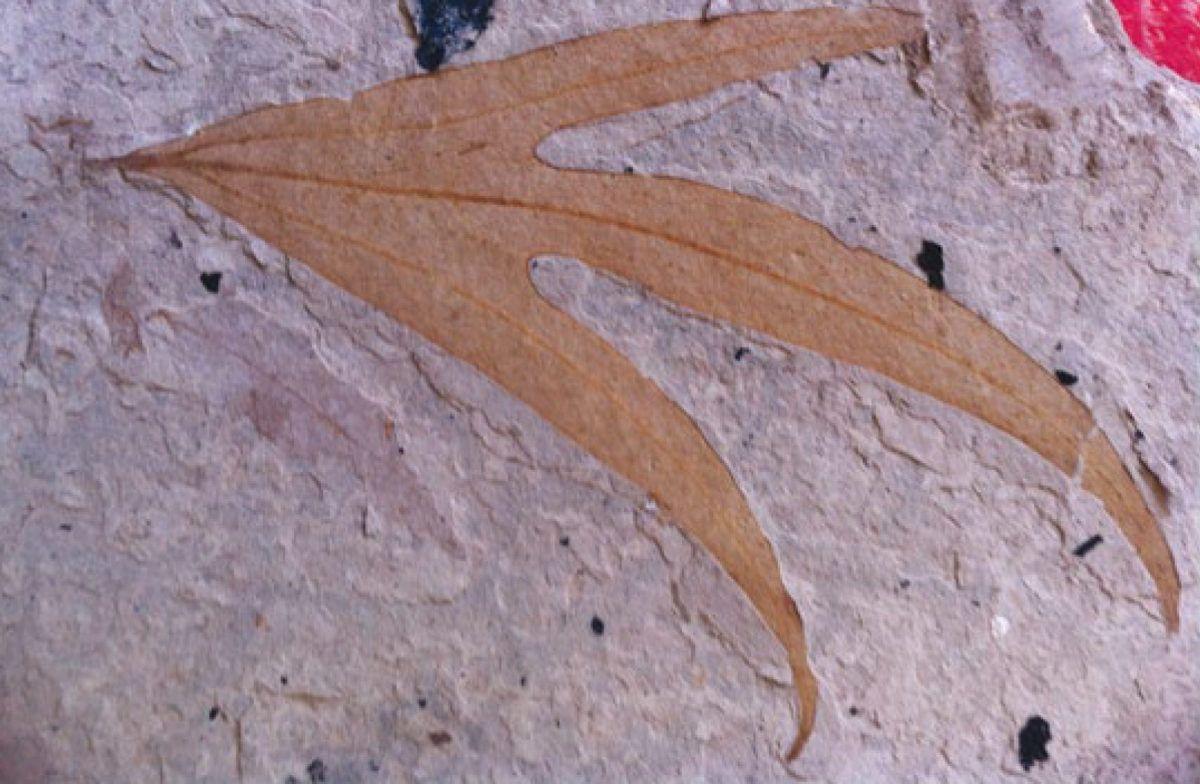 La historia geológica de las plantas
