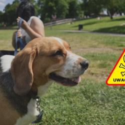 Uwaga! Trutki dla zwierząt na terenie Mistrzejowic!