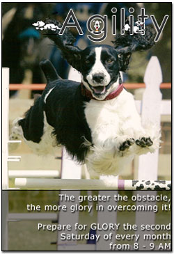 Agility Obstacles Class