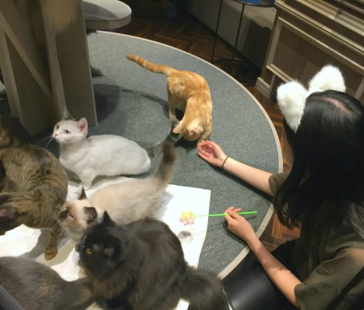 none of the cats gave a sh*t about me (no food, no love)