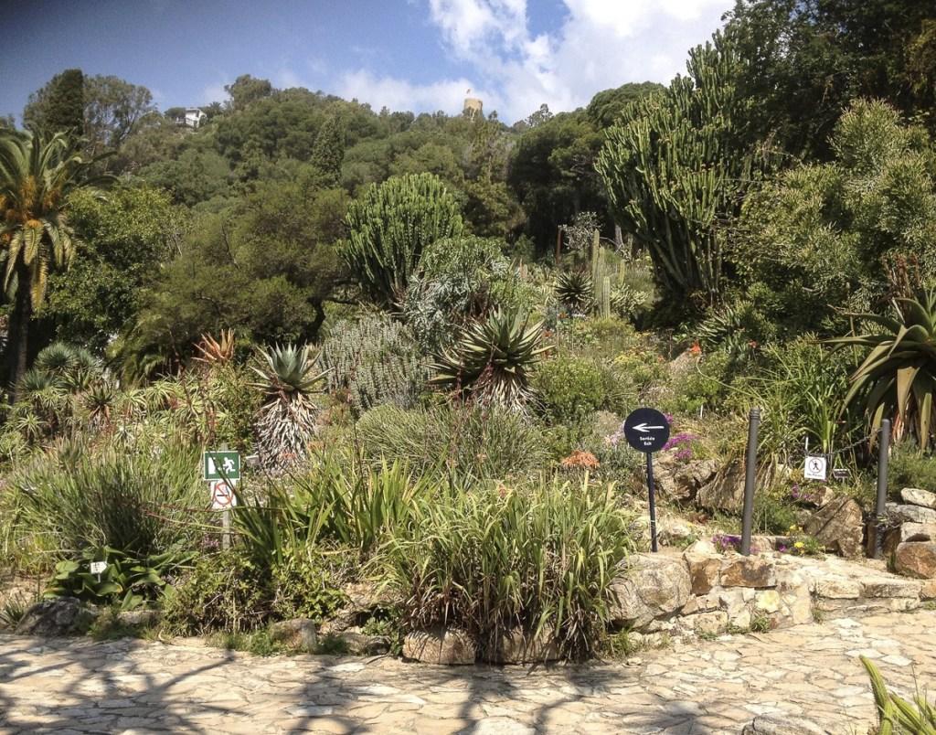 Garten afrikanische Trockengebiete - Jardí Botànic Marimurtra