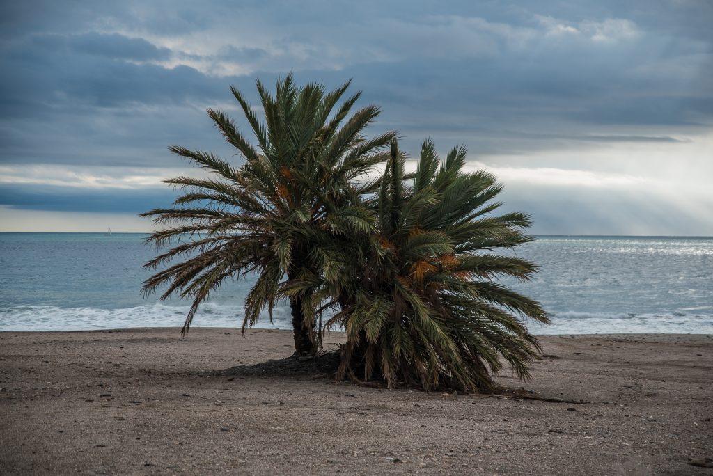 Playa Macenas