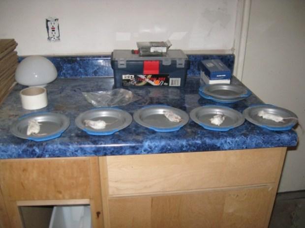 Five mice on plates