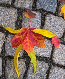 Ein Blättermännchen aus bunten Herbstblättern mit einer Handtasche.