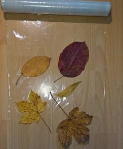 Du rollst Frischhaltefolie ab und verteilst deine Blätter auf der Folie.