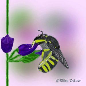 Die Große Wollbiene beißt in eine Blüte und schläft.