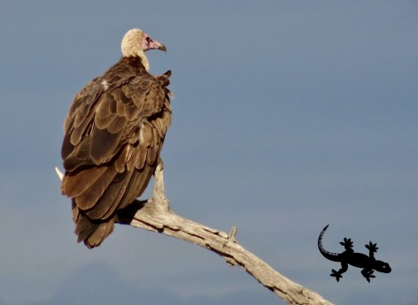 Vulture and heavy sky