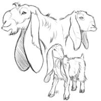 Damascus Goats