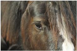 Der Mensch und das Pferd  sind geschichtlich betrachtet sehr eng miteinander verbunden.
