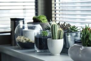 Grünpflanzen Nachhaltigkeit Büro Foto