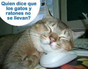 imagen-graciosa-gato