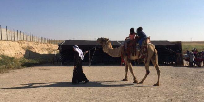 סלפי עם יענים, פיתות על הסאג' ורכיבה על גמלים: שבועות בישוב תראבין