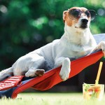 Heat Safety Tips for Your Pets