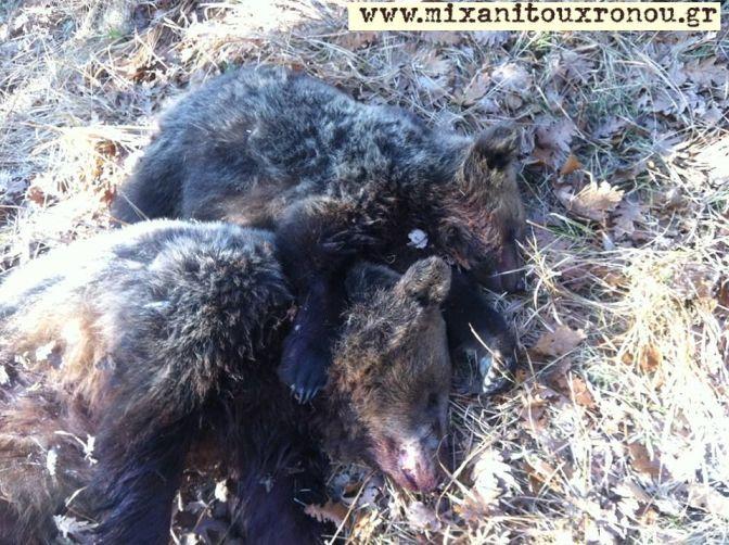 bears dead from gun 3 mtx